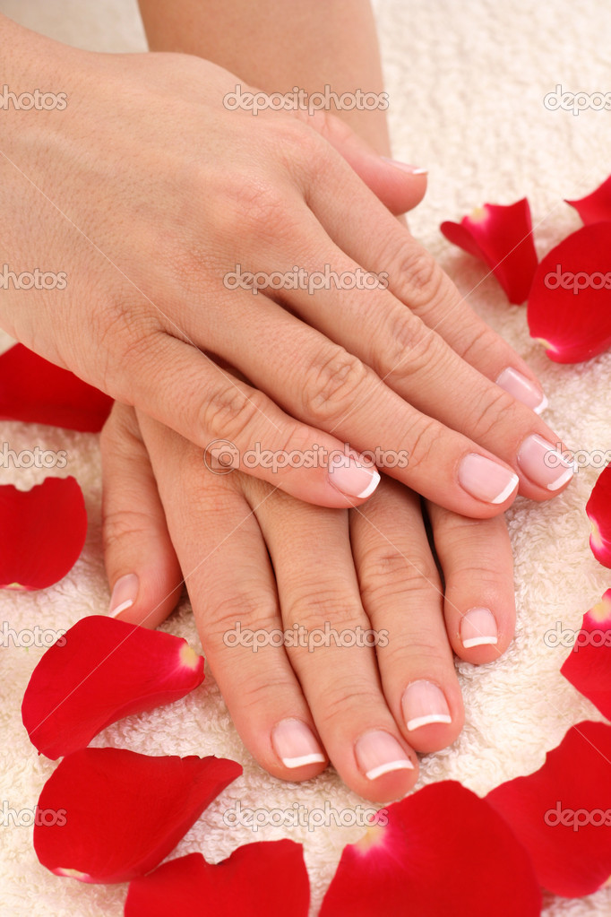 Beautiful hands with french manicure  Stock Photo #4449739