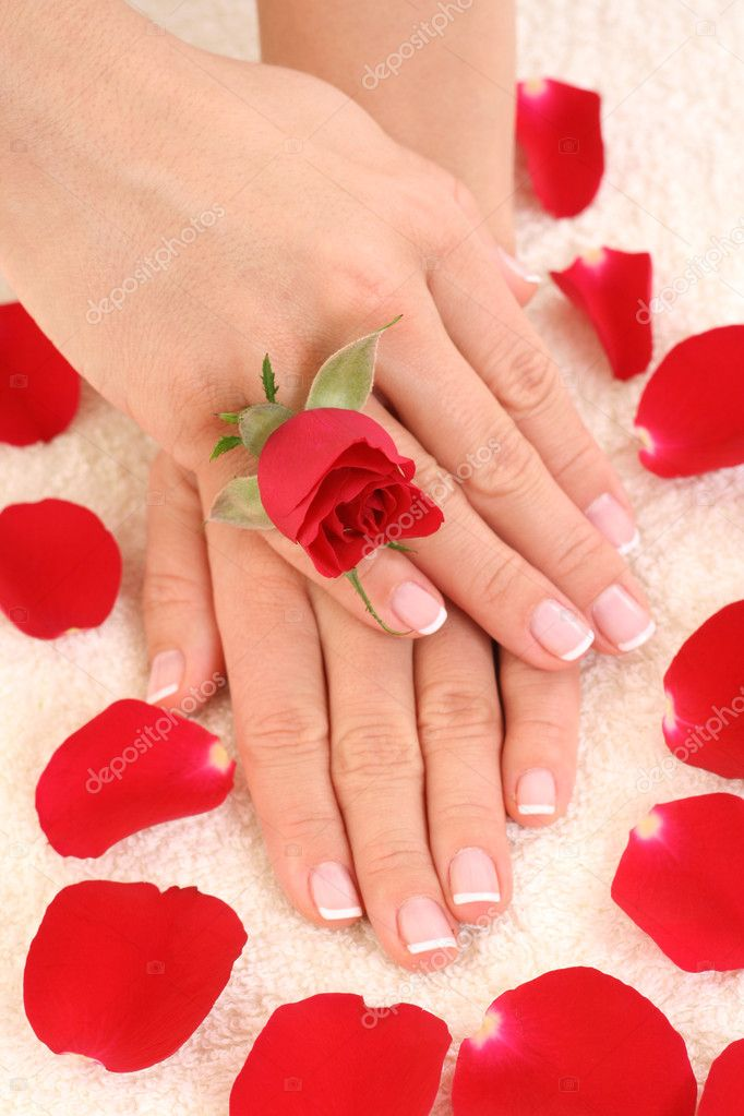 Beautiful hands with french manicure — Stock Photo #4449760