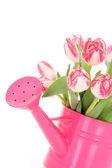 Spring time! — Stock Photo