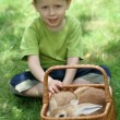 Boy and rabbit - Stockfoto
