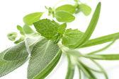 Hierbas frescas — Foto de Stock