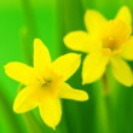 Spring — Stock Photo #4537102
