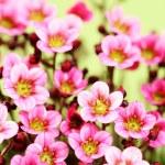 Little pink — Stock Photo #4537593
