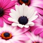 Pink spring — Stock Photo #4538253