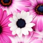 Pink spring — Stock Photo #4538266