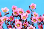 Little pink — Stock Photo