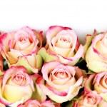 bos van rozen — Stockfoto #4575941