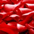 Rose petals background — Stock Photo #4576172