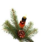 Fir tree essential oil — Stock Photo
