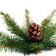 Fir tree — Stock Photo #4577701