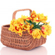 Basket of tulips - Stock Photo
