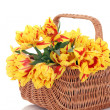 Basket of tulips — Stock Photo