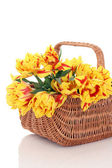 Basket of tulips — Stock fotografie