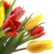 Tulips — Stock Photo #4591690