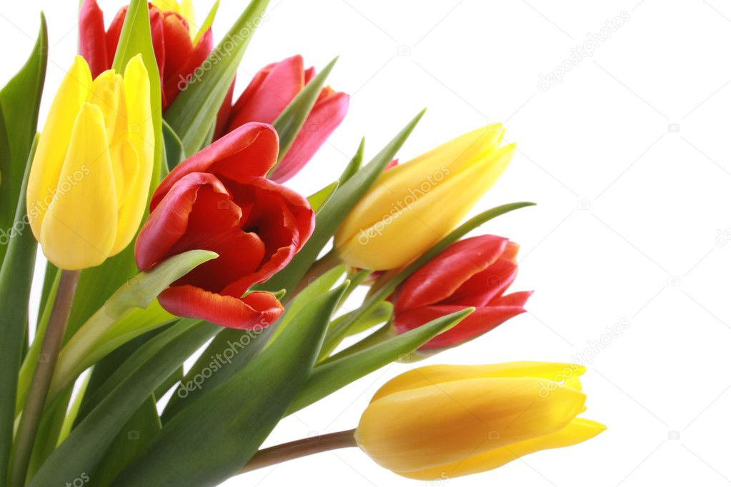 Bunch of lovely red and yellow tulips isolated on white — Stock Photo #4591690