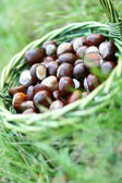 Chestnuts — Foto de Stock