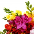 Lovely freesia - Stock Photo
