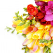 Lovely freesia — Stock Photo