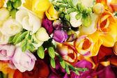 Lovely freesia flowers — Stock Photo