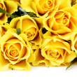 Yellow roses — Stock Photo #5012071