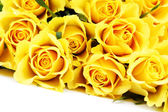 Yellow roses — Stock Photo