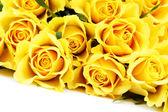 Yellow roses — Stok fotoğraf