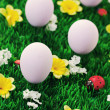 Easter eggs in green — Stock Photo #5218092