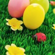 Easter eggs in green — Stock Photo #5218121