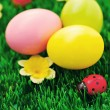 Easter eggs in green — Stock Photo #5218127