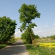 Country road - Stockfoto