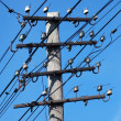 High voltage power line — Stock Photo #3055374