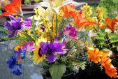 Plast blommor — Stockfoto