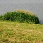 Reeds at the lake — Stock Photo