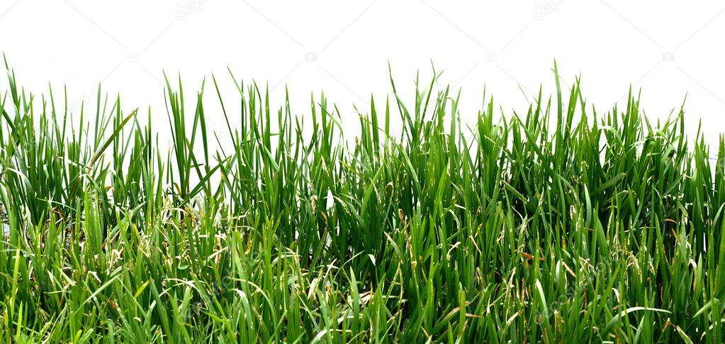 Closeup view of grass along the water's edge — Stock Photo #3260068