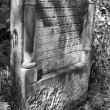 Old jewish cemetery in Ozarow. Poland — Stock fotografie
