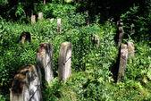 Old jewish cemetery in Ozarow. Poland — Foto de Stock