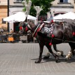 Stock Photo: Poland krakow horse carriage