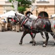Horse-drawn buggies trot around Krakow - Stock Photo
