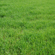 Green field — Stock Photo #3602534