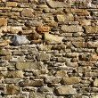 Foto Stock: Old wall