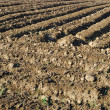 Stock Photo: Tillage brown background