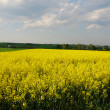 Beautiful spring landscape — Stock fotografie