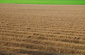 Tillage brown background — Stock Photo