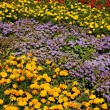 Flowers with beautiful colors — ストック写真
