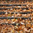 Outdoor stairway with yellow fallen leaves — Stok fotoğraf