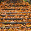 Outdoor stairway with yellow fallen leaves — ストック写真