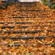 Outdoor stairway with yellow fallen leaves — Stock Photo #3878937