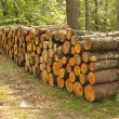 stapel hout in bos — Stockfoto