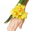 Hand and daffodils — Stock Photo