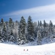 Foto Stock: Fresh Snow